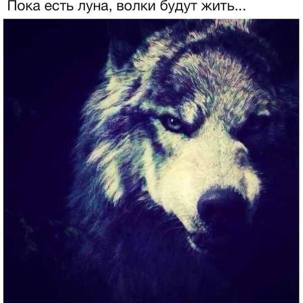 Блатной удар одинокий волк скачать бесплатно mp3 penpiatranuf's blog.