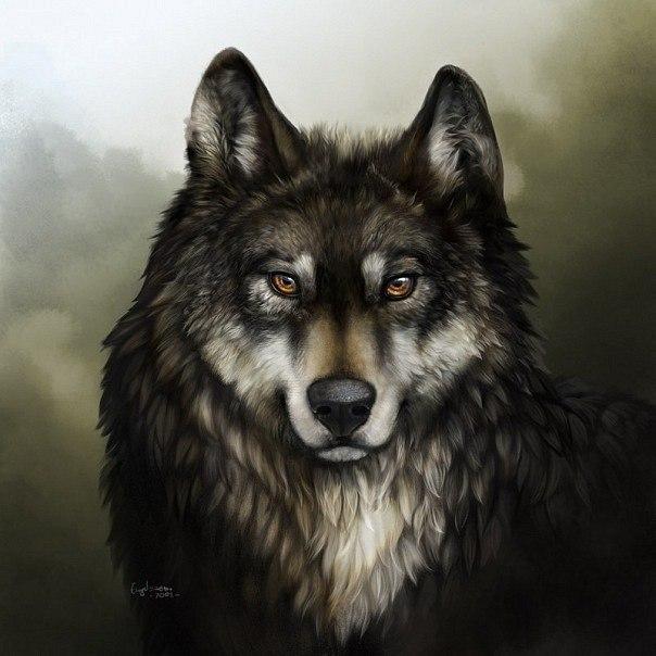 Скачать st1m-я одинокий волк.